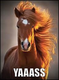 yaaass-horse